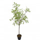 Spring tree potted, H86cm, green